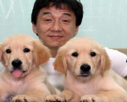 Por que Jackie Chan?